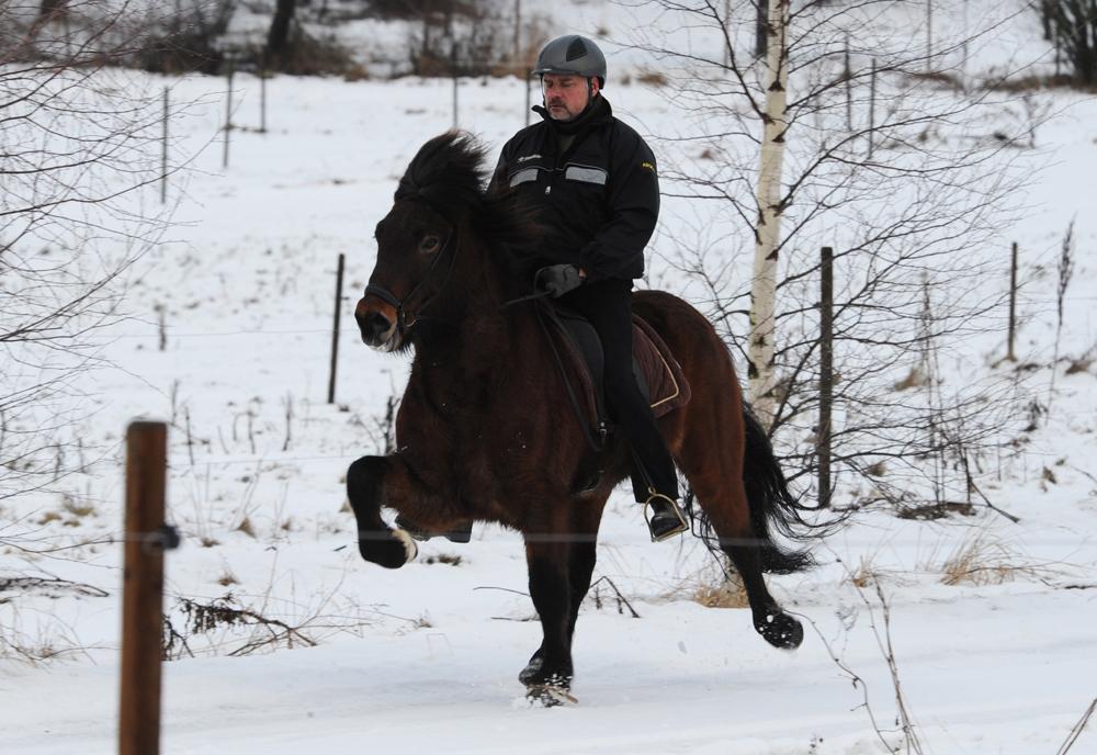 Fjörnir frá Hólum, 13 januari 2013. Ryttare: Johan Häggberg.